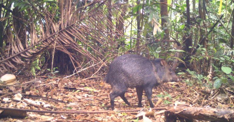 biodiversidad-conservacion-areas_naturales_protegidas-bosques-bolivia-6-768x400.jpg