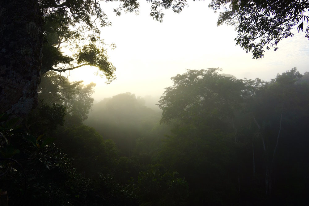 Misty morning from canopy.jpg