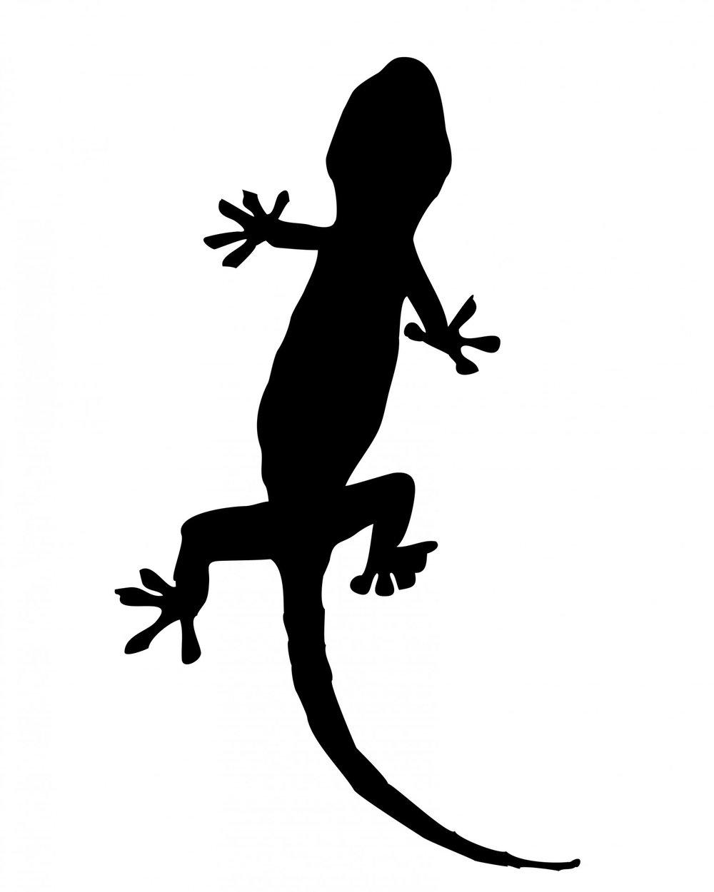 23 species of reptiles
