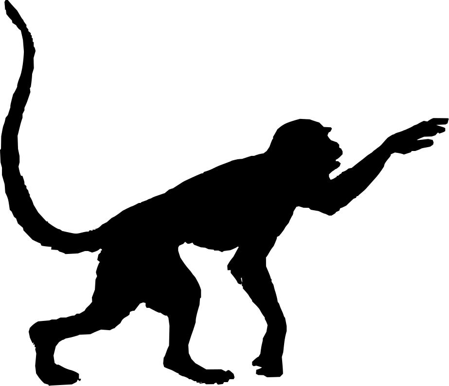 15 species of primates