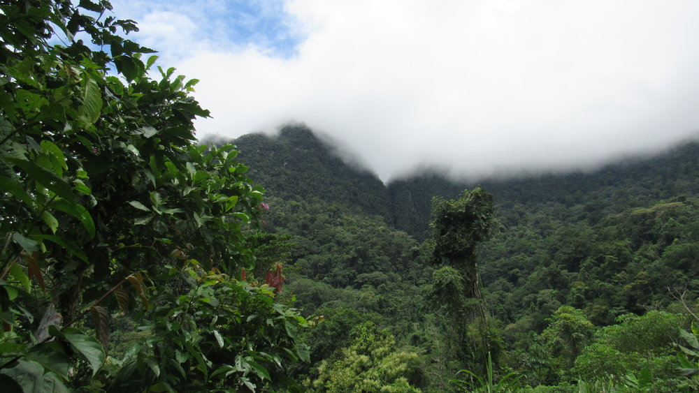 Gran Ochanache Conservation Concession