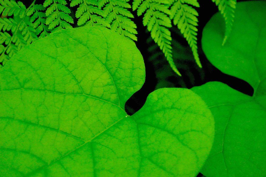 Amazing-green-L