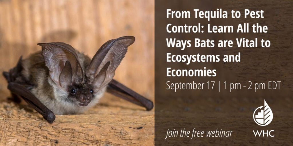 poster for the webinar about the relationship between bats and tequila